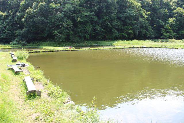 札幌市 釣り堀 小林養鯉場
