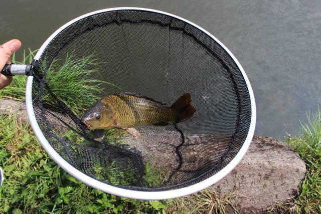 小林養鯉場 鯉