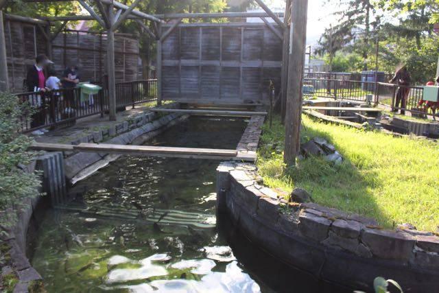 屋外かんさつ池