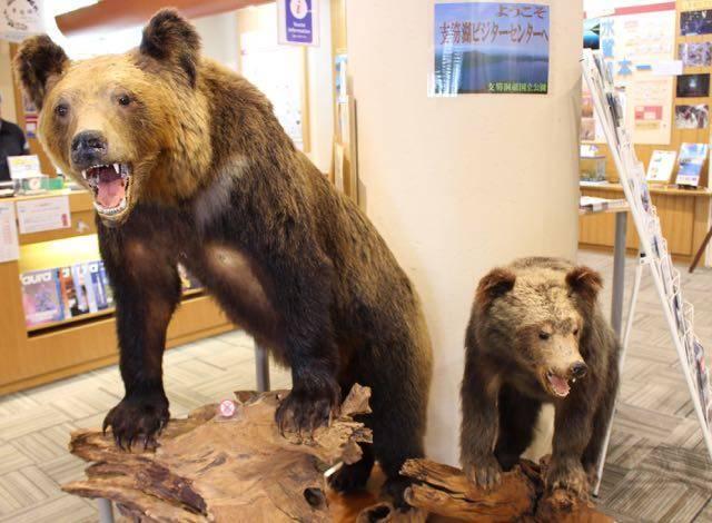支笏湖ビジターセンター 熊