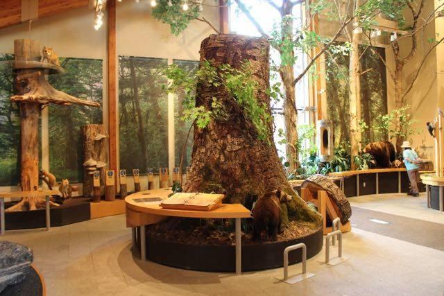 支笏湖ビジターセンター 森の世界