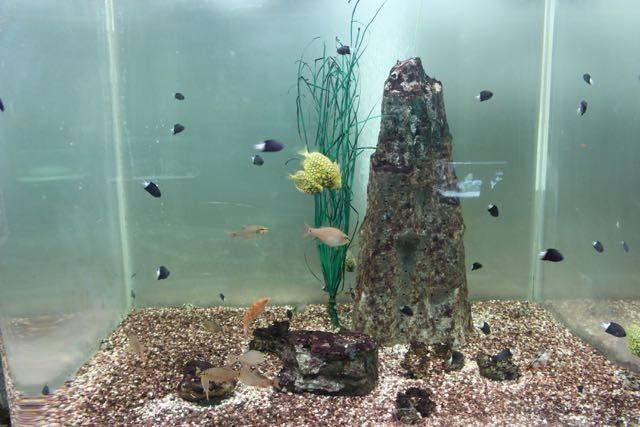 変わった模様の魚