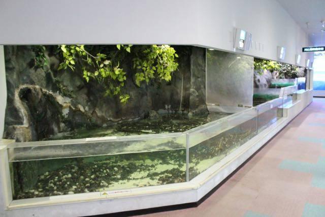 川と湖の魚