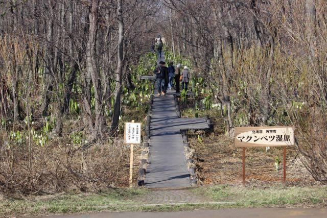マクンベツ湿原 木道