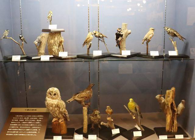 百年記念館 野鳥