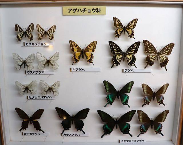 百年記念館 蝶