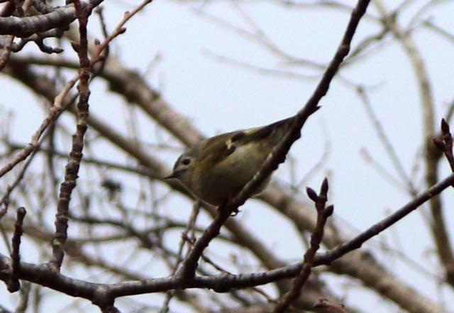西岡公園 野鳥