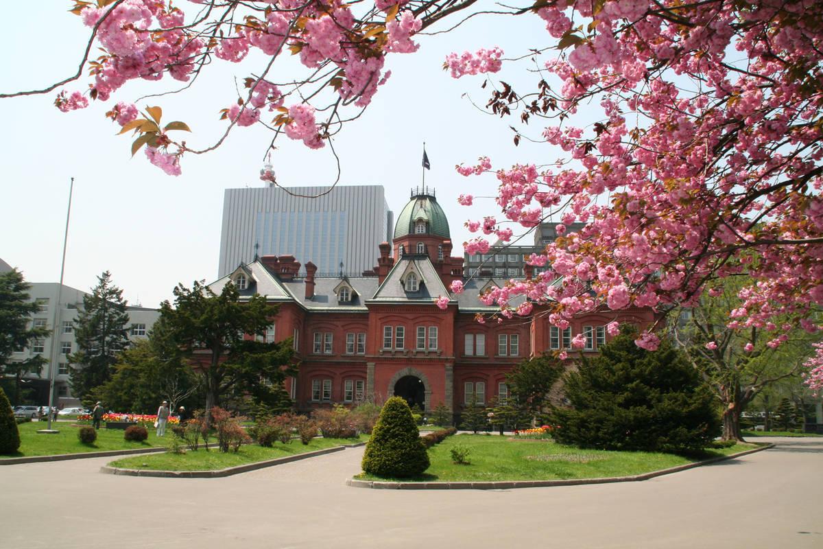 北海道庁あかれんが 桜