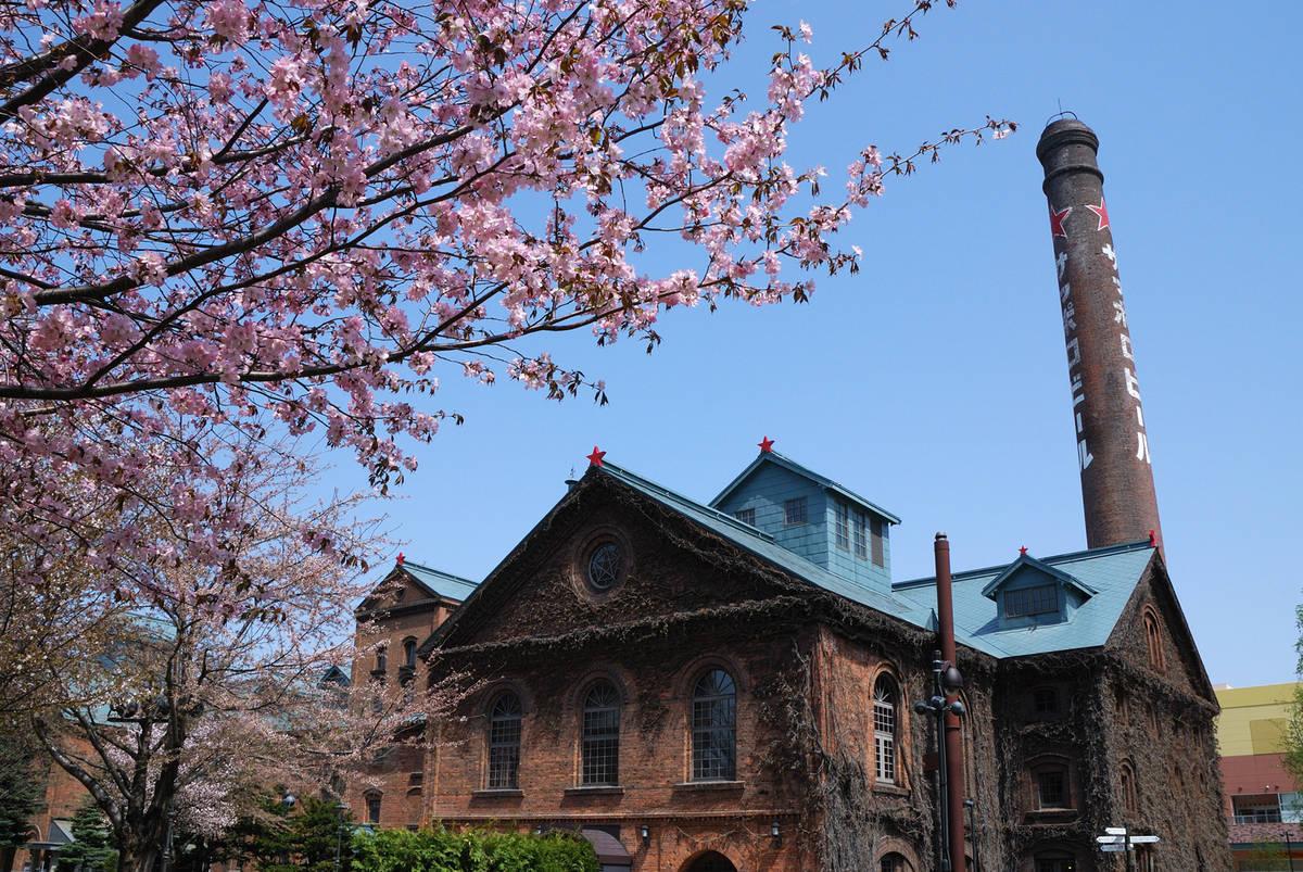 札幌ビール園 桜