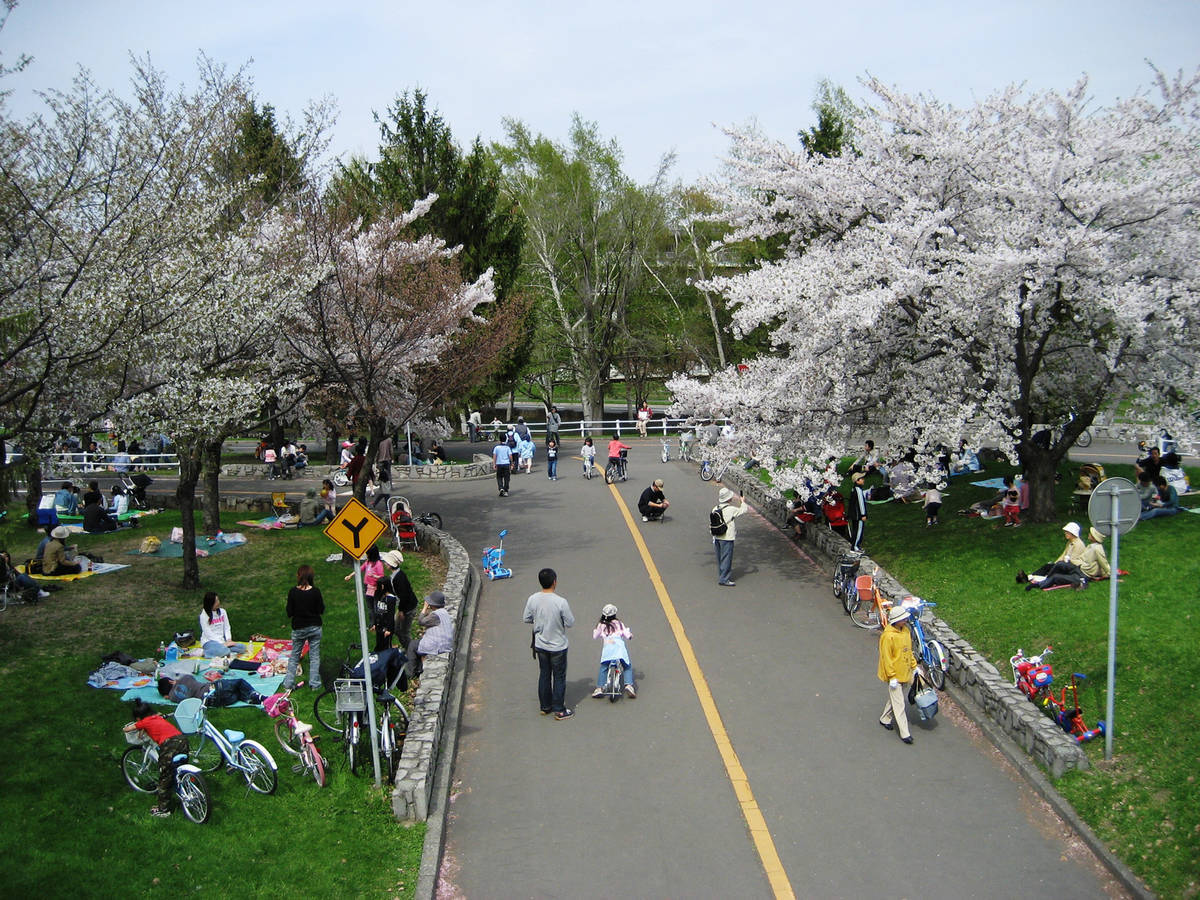 農試公園 桜