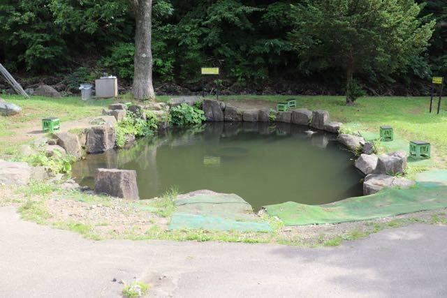ばんけい釣り堀 ニジマスの池