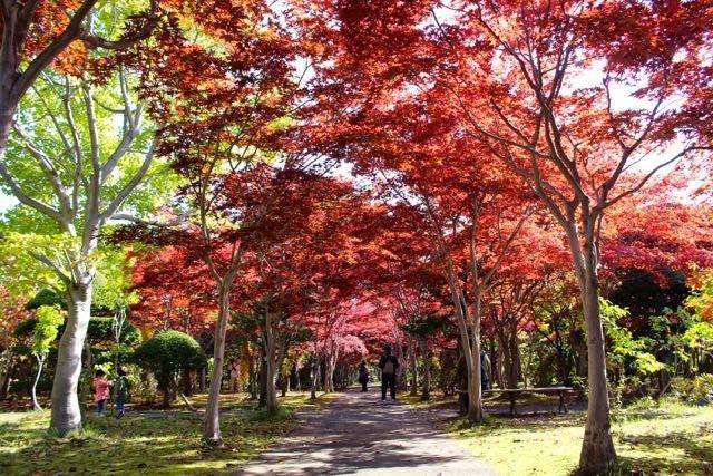 平岡樹芸センター 紅葉