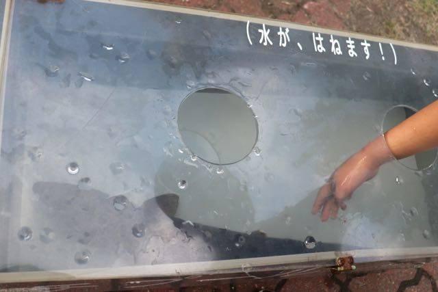 豊平川さけの科学館 サケのタッチプール