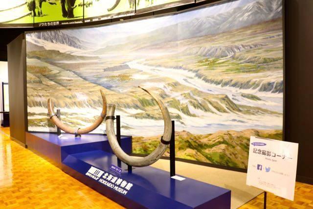 北海道博物館 展示物