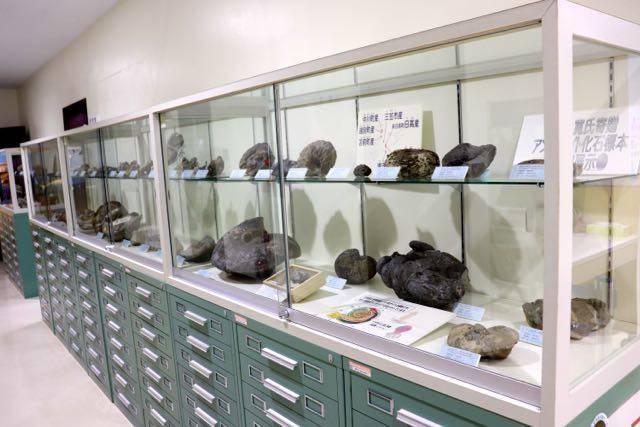 札幌市博物館活動センター アンモナイト化石