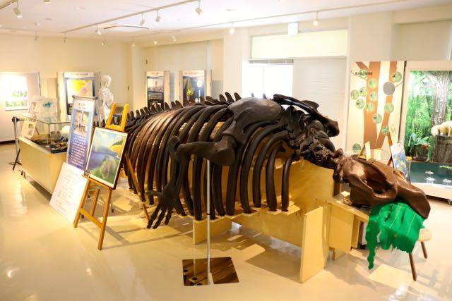 札幌市博物館活動センター サッポロカイギュウ