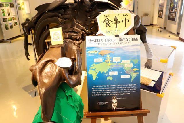 札幌市博物館活動センター カイギュウ