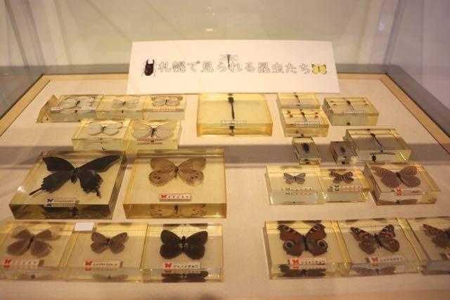 博物館活動センター 昆虫