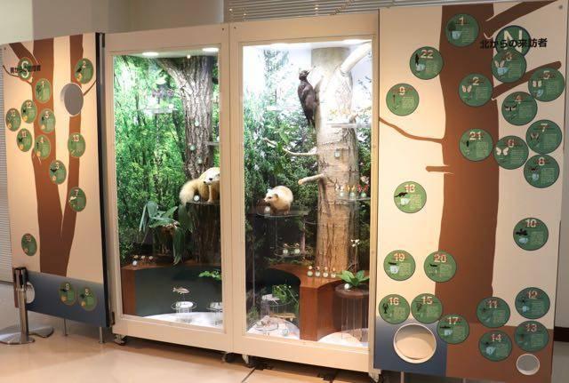 札幌市博物館活動センター 展示