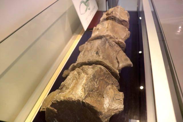 札幌市博物館活動センター クジラ化石