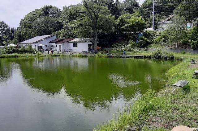 アオヤマ園 鯉釣り堀