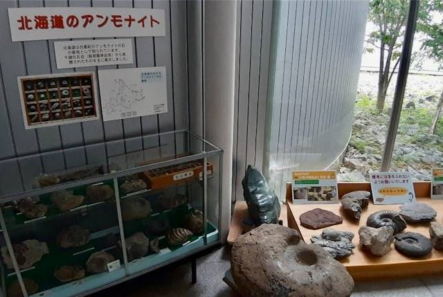 足寄動物化石博物館 アンモナイト