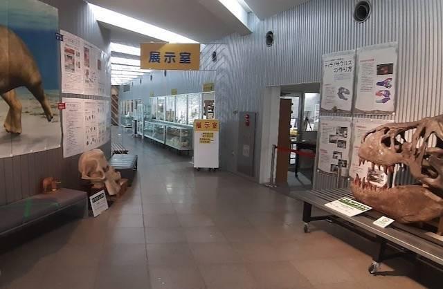 足寄動物化石博物館 展示室