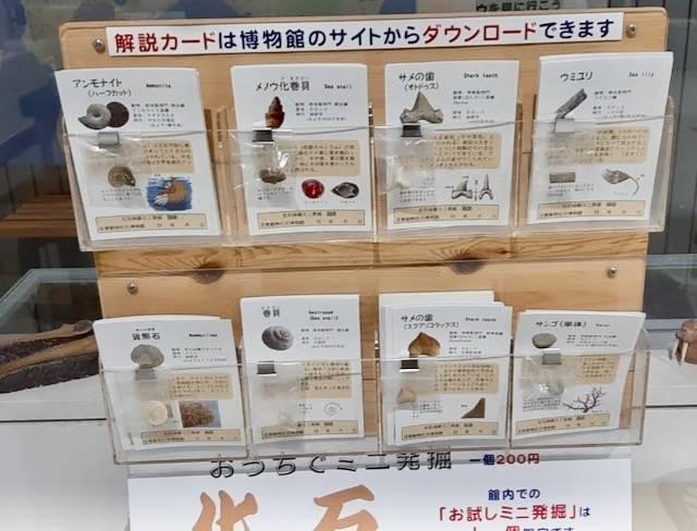 足寄動物化石博物館 ミニ発掘