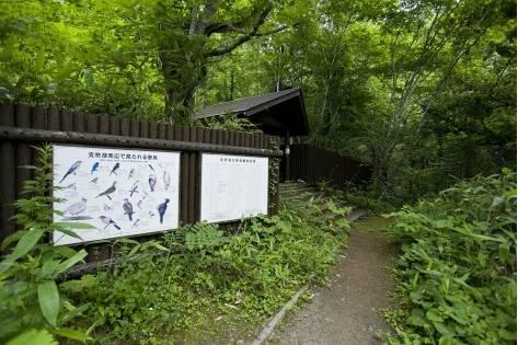 野鳥の森 支笏湖