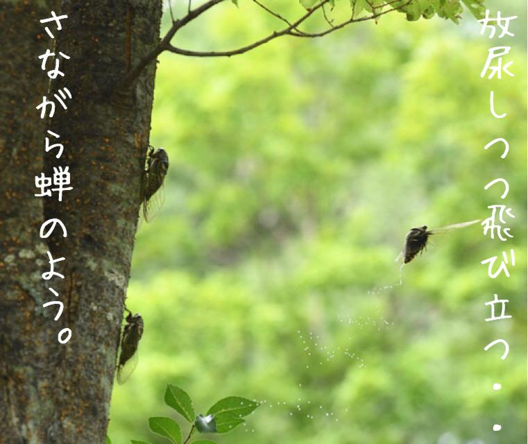 f:id:kitano-stop:20181103234445j:plain