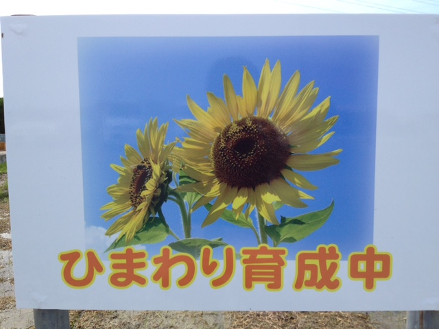f:id:kitanoanshinichi:20120622142242j:image