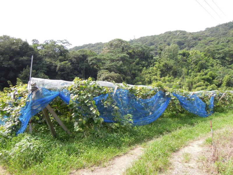 f:id:kitanoanshinichi:20130911112248j:image