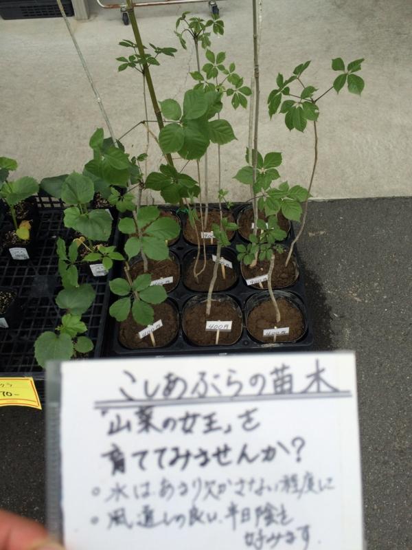 f:id:kitanoanshinichi:20150527214815j:image:w360