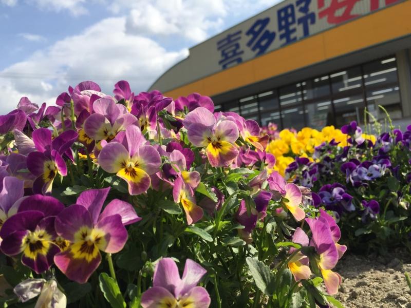 f:id:kitanoanshinichi:20160324145035j:image