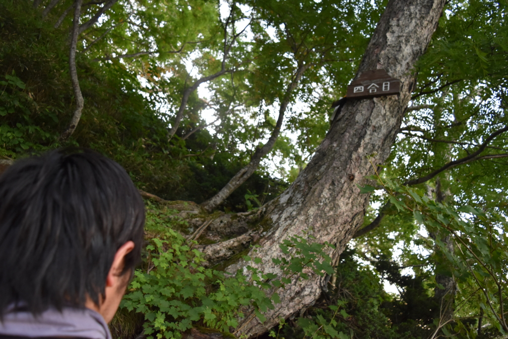 f:id:kitasennju_yamabu:20170415202551j:plain
