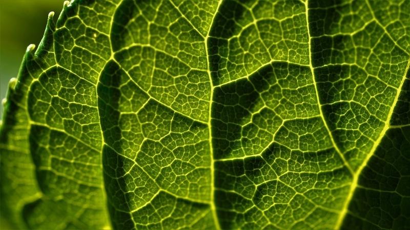 leaf-5072835_1280.jpg