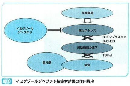イミダゾールジペプチド抗疲労効果の作用機序