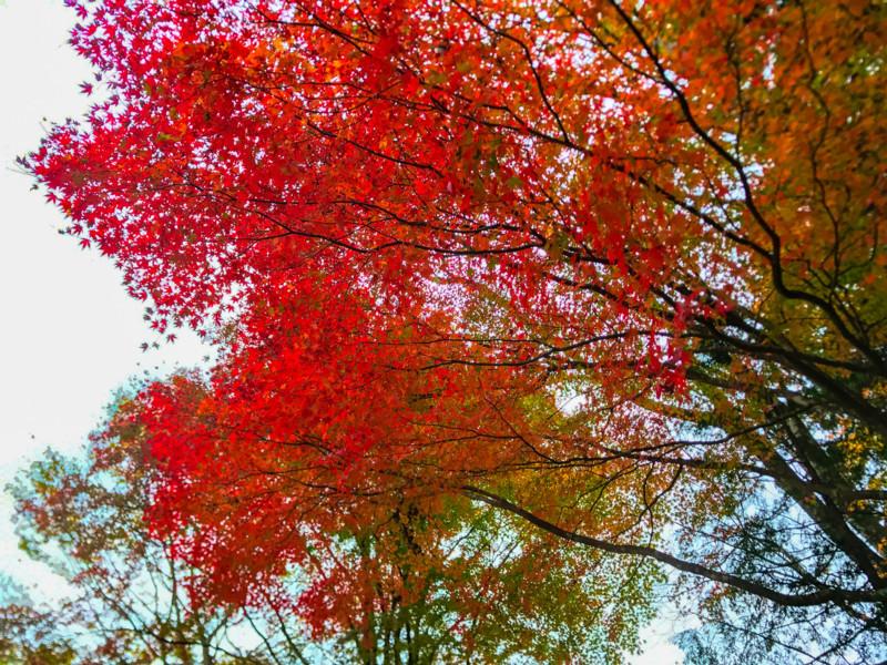 金時神社の紅葉