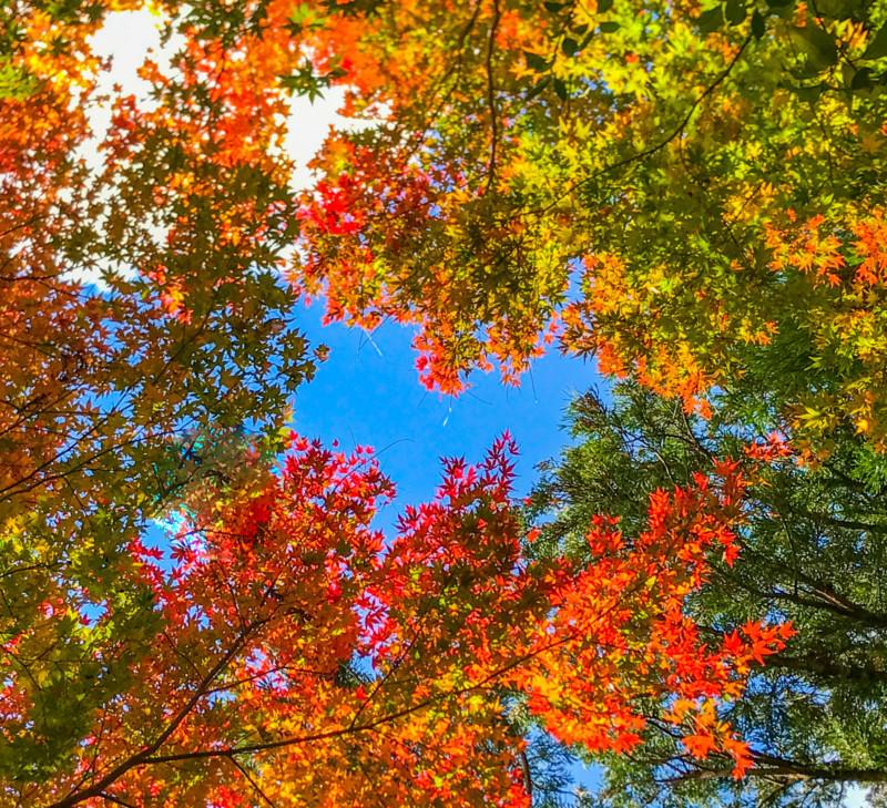 紅葉とハート型の空