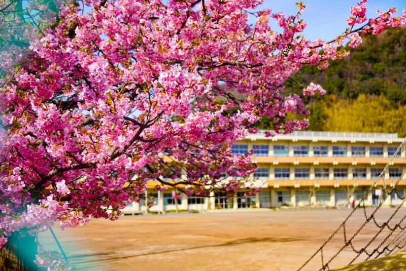 南小学校の桜と校舎