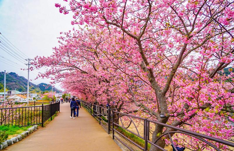豊泉橋〜かわづいでゆ橋の散歩道