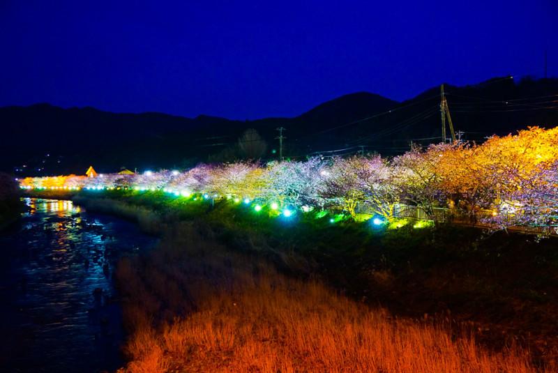 豊泉橋~かわづいでゆ橋 間のライトアップと河津川