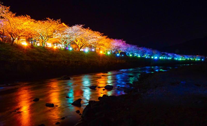 河原から見た豊泉橋~かわづいでゆ橋 間のライトアップ