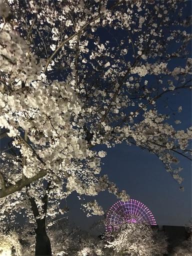 f:id:kiyokumakiyokuma:20190409221731j:image