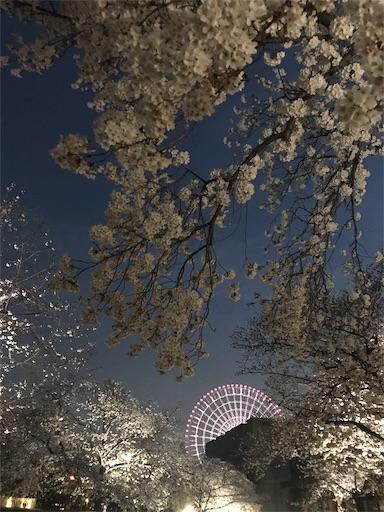 f:id:kiyokumakiyokuma:20190409221746j:image