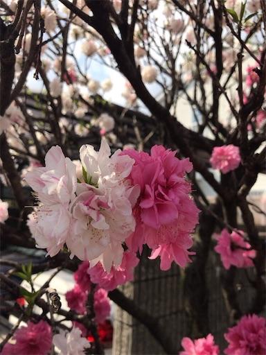 f:id:kiyokumakiyokuma:20190409222700j:image