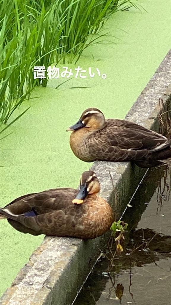 f:id:kiyokumakiyokuma:20200707180615j:image