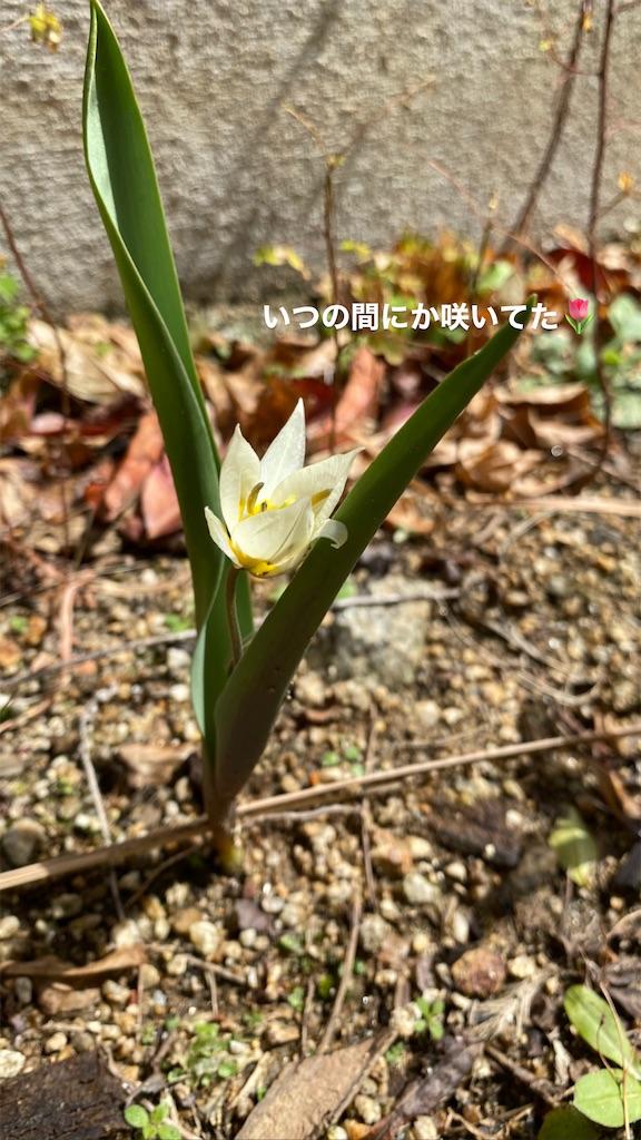 f:id:kiyokumakiyokuma:20210322130703j:image