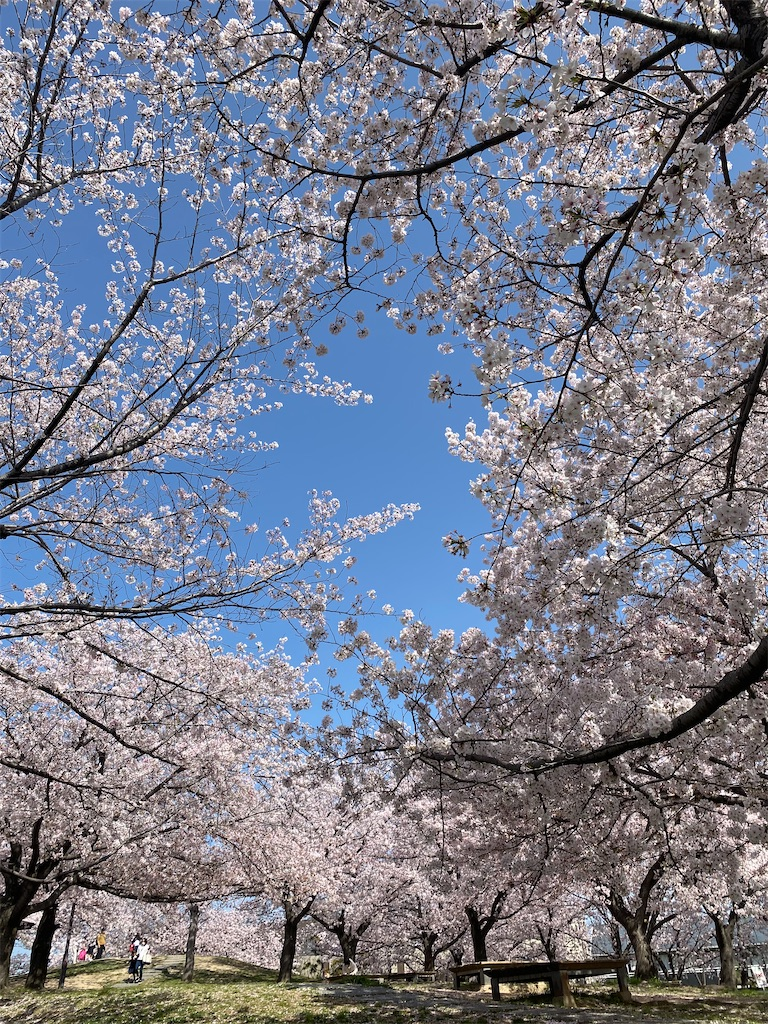 f:id:kiyokumakiyokuma:20210401223236j:image