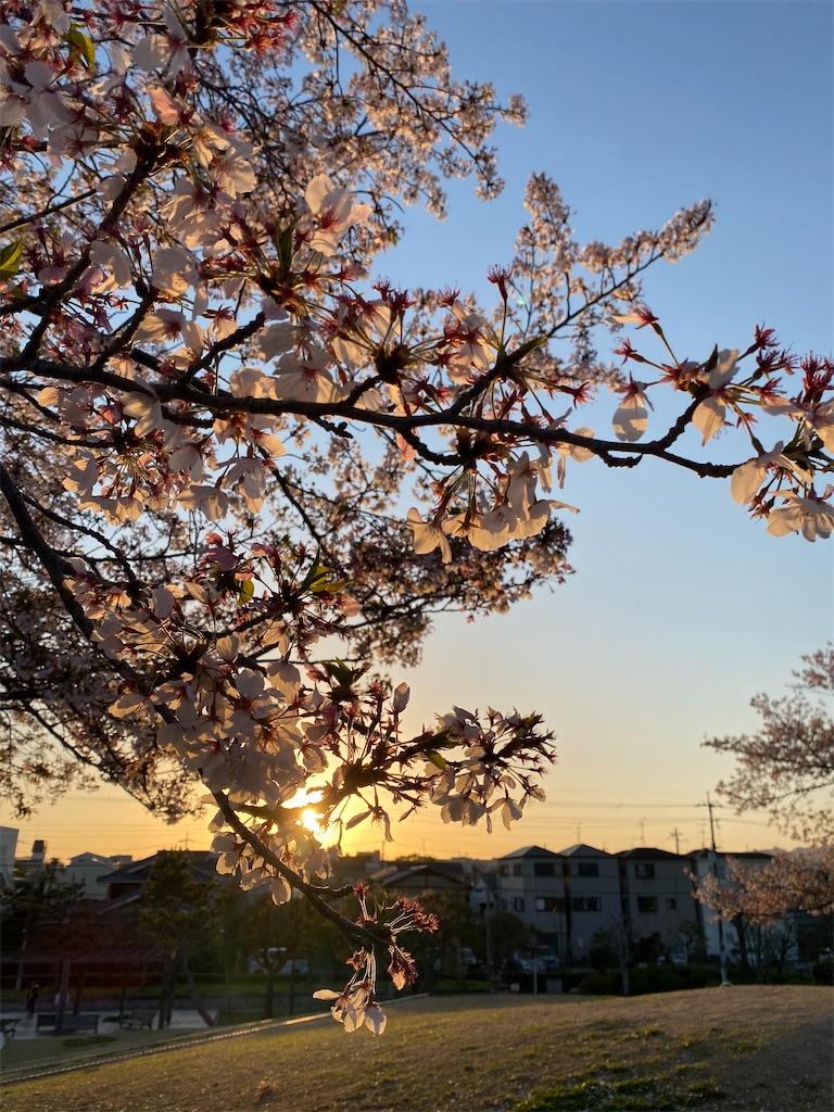 f:id:kiyokumakiyokuma:20210406003146j:image